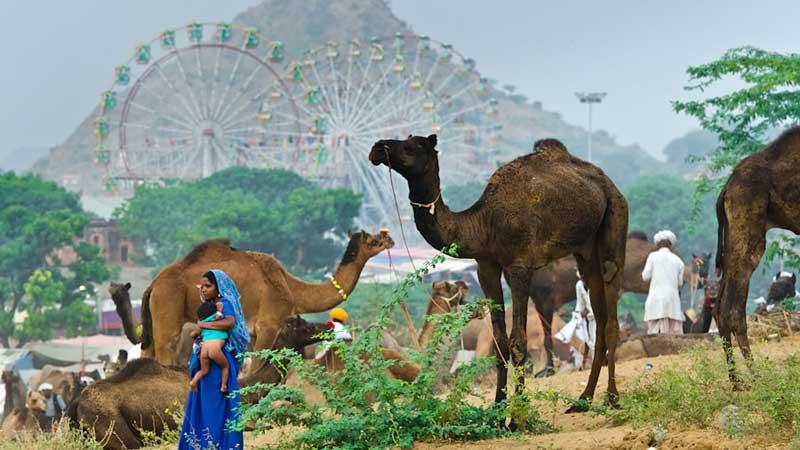 12 Nights 13 Days Rajasthan Tour